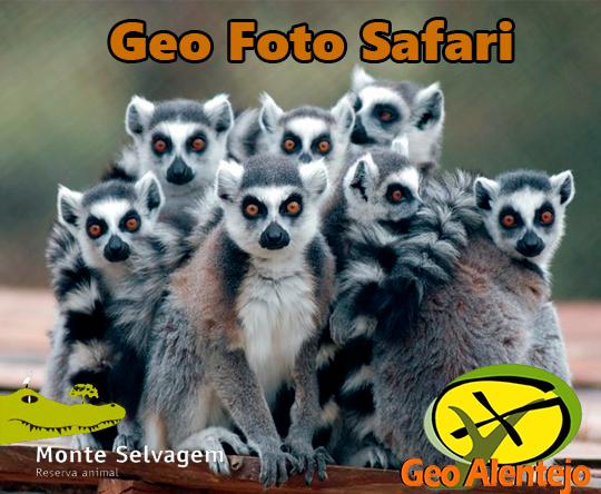 Geo-Foto-Safari